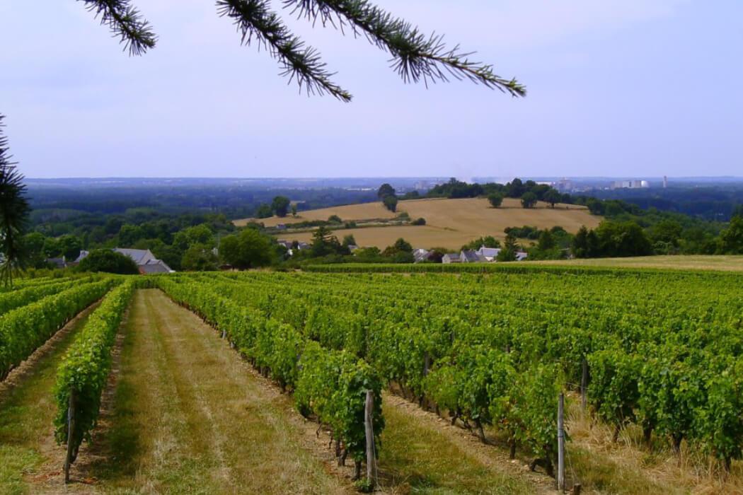 Le Clos Domaine Bellivier, vignerons en AOC Chinon