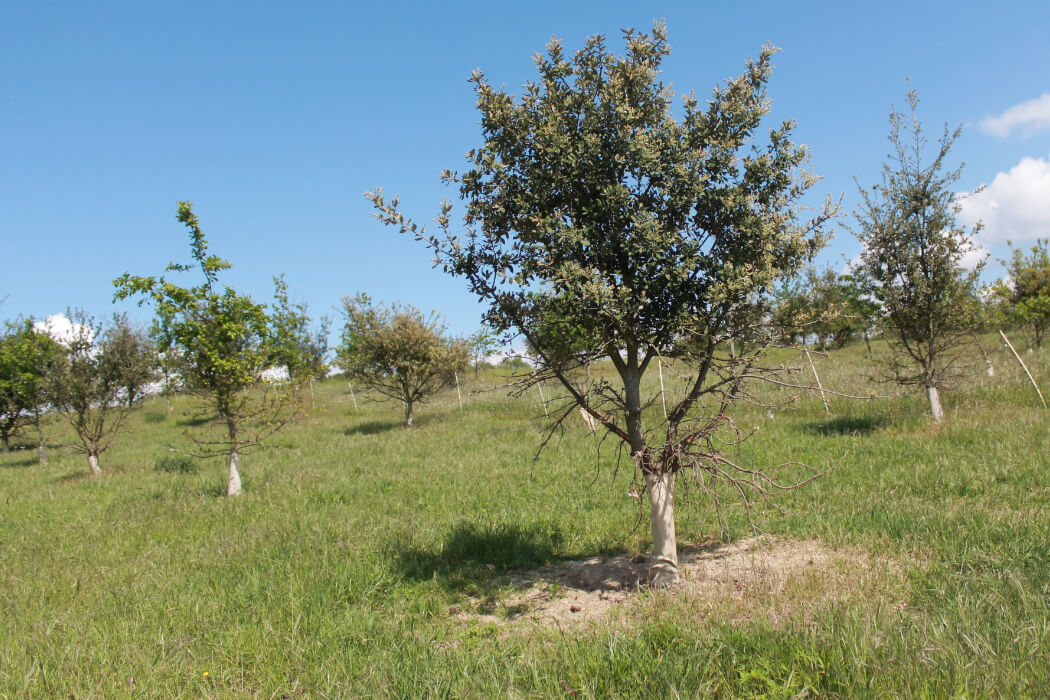 Truffière Domaine Bellivier
